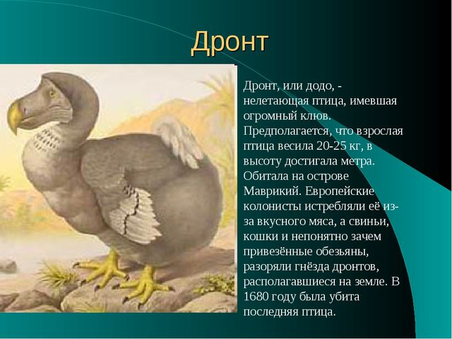 Дронт Дронт, или додо, - нелетающая птица, имевшая огромный клюв. Предполагае...