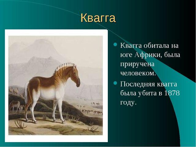 Квагга Квагга обитала на юге Африки, была приручена человеком. Последняя кваг...