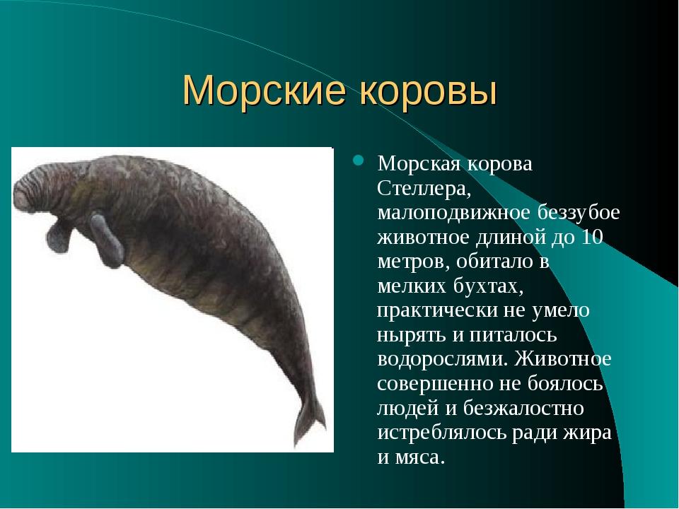 Морские коровы Морская корова Стеллера, малоподвижное беззубое животное длино...
