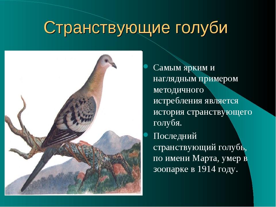Странствующие голуби Самым ярким и наглядным примером методичного истребления...