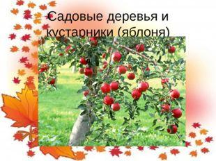Садовые деревья и кустарники (яблоня)
