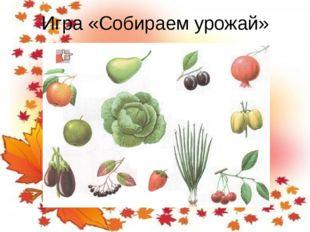 Игра «Собираем урожай»