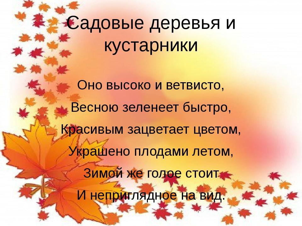 Садовые деревья и кустарники Оно высоко и ветвисто, Весною зеленеет быстро, К...