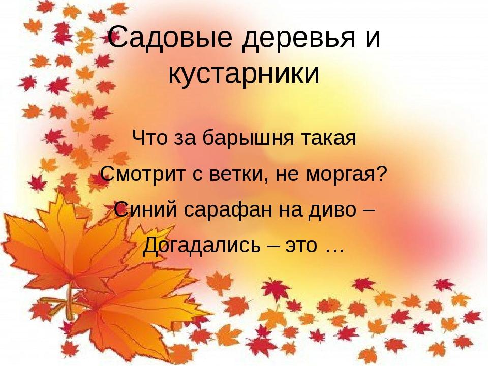 Садовые деревья и кустарники Что за барышня такая Смотрит с ветки, не моргая?...