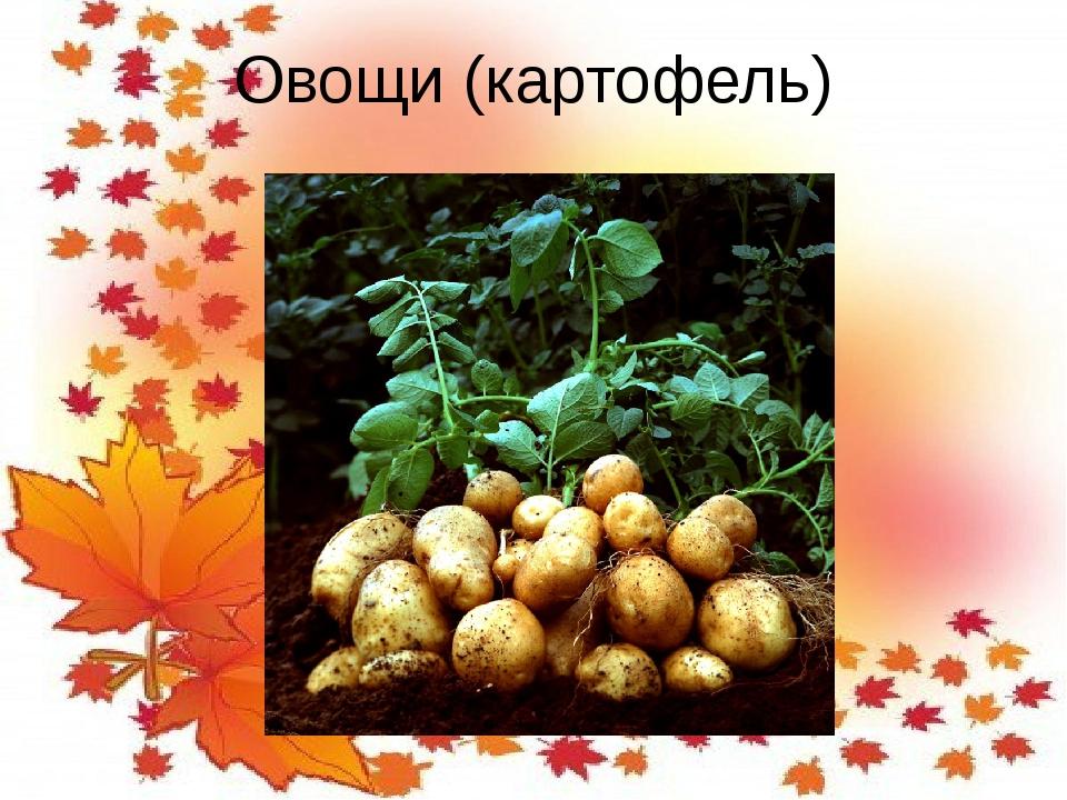 Овощи (картофель)