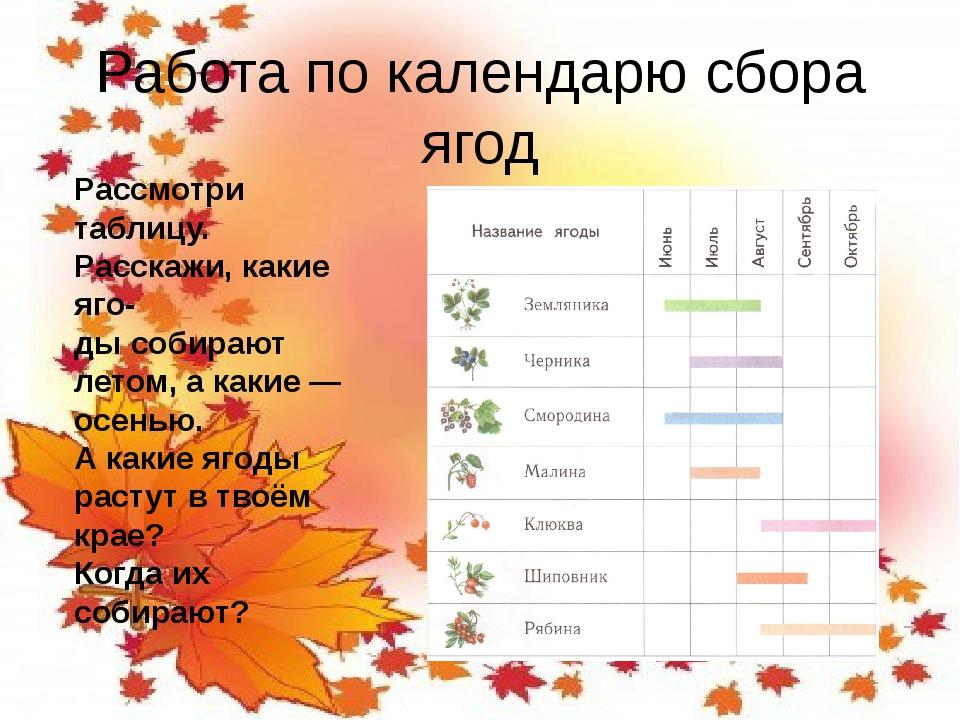 Работа по календарю сбора ягод Рассмотри таблицу. Расскажи, какие яго- ды соб...