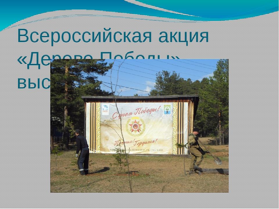 Всероссийская акция «Дерево Победы», высажено 80 деревьев