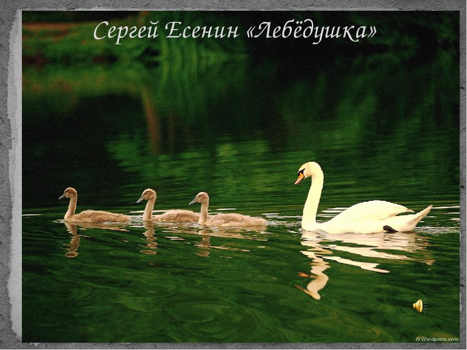 Сергей Есенин «Лебёдушка»