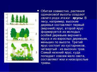 Обитая совместно, растения одинаковой высоты создают своего рода этажи - ярус