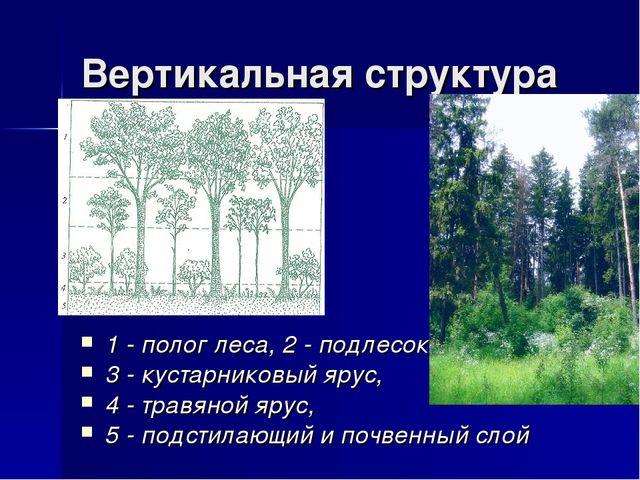 Вертикальная структура 1 - полог леса, 2 - подлесок, 3 - кустарниковый ярус,...