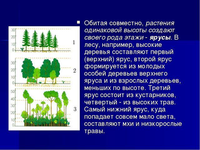 Обитая совместно, растения одинаковой высоты создают своего рода этажи - ярус...