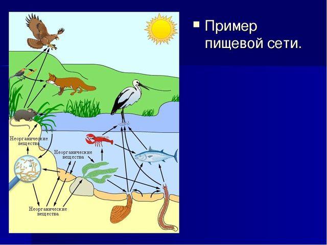 Пример пищевой сети.