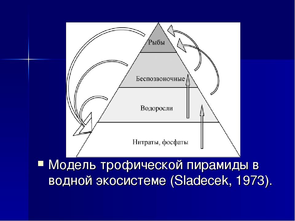 Модель трофической пирамиды в водной экосистеме (Sladecek, 1973).