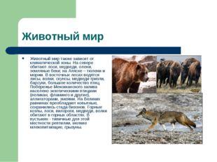 Животный мир Животный мир также зависит от климатической зоны. На севере обит