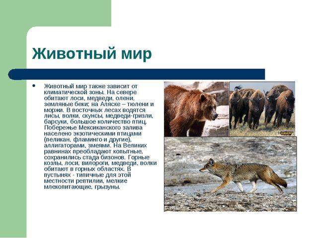 Животный мир Животный мир также зависит от климатической зоны. На севере обит...