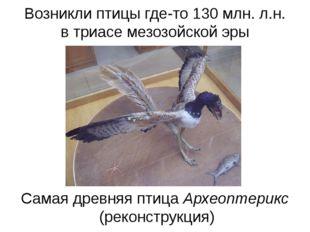 Возникли птицы где-то 130 млн. л.н. в триасе мезозойской эры Самая древняя пт