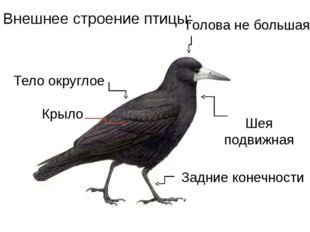 Тело округлое Голова не большая Шея подвижная Внешнее строение птицы: Крыло З