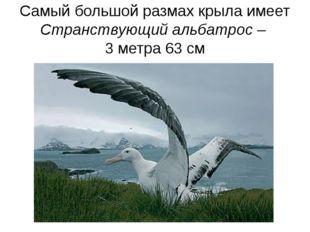 Самый большой размах крыла имеет Странствующий альбатрос – 3 метра 63 см