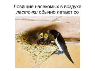 Ловящие насекомых в воздухе ласточки обычно летают со скоростью 40-60 км/ч