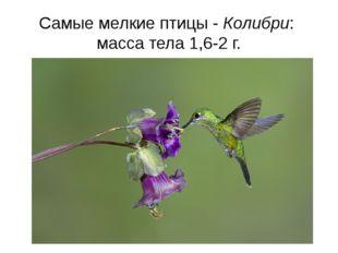 Самые мелкие птицы - Колибри: масса тела 1,6-2 г.