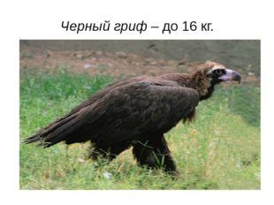 Черный гриф – до 16 кг.