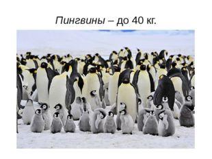 Пингвины – до 40 кг.