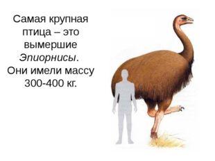 Самая крупная птица – это вымершие Эпиорнисы. Они имели массу 300-400 кг. Оби