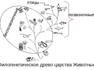 Филогенетическое древо царства Животные птицы позвоночные беспозвоночные