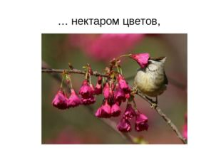 … нектаром цветов,