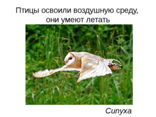 Птицы освоили воздушную среду, они умеют летать Сипуха