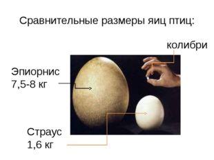 Сравнительные размеры яиц птиц: Эпиорнис 7,5-8 кг Страус 1,6 кг колибри