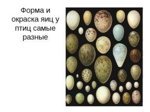 Форма и окраска яиц у птиц самые разные
