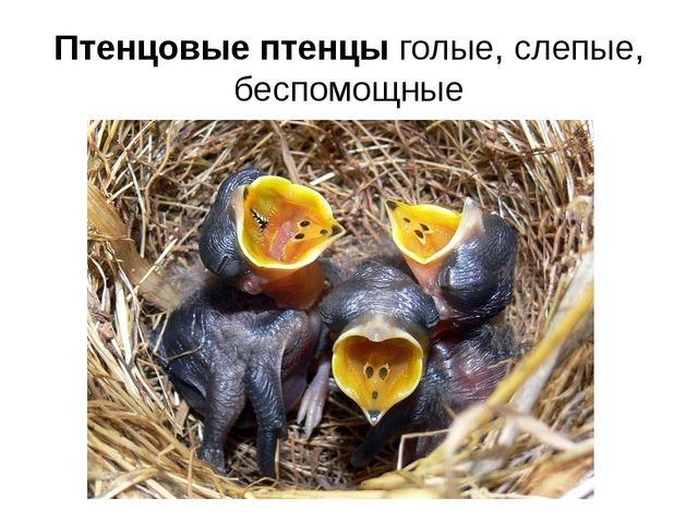 Птенцовые птенцы голые, слепые, беспомощные