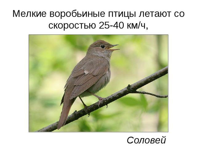 Мелкие воробьиные птицы летают со скоростью 25-40 км/ч, Соловей