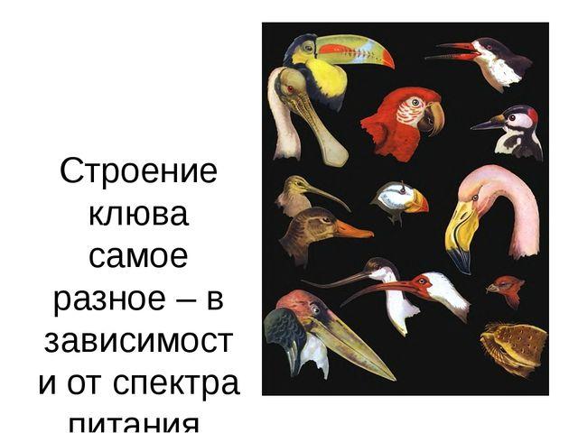 Строение клюва самое разное – в зависимости от спектра питания