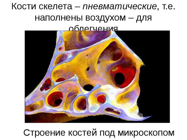 Кости скелета – пневматические, т.е. наполнены воздухом – для облегчения Стро...