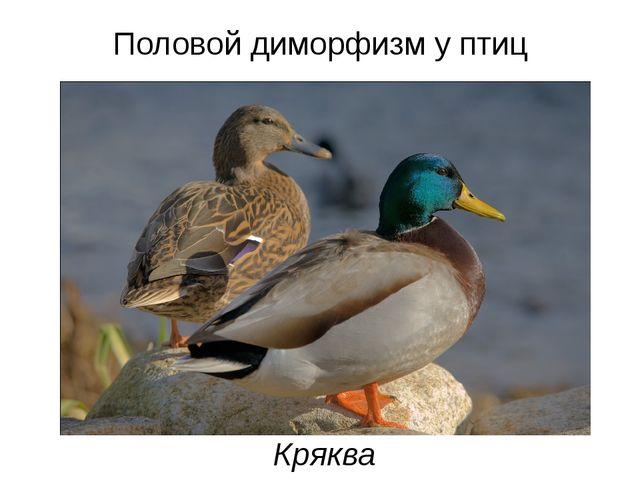 Половой диморфизм у птиц Кряква