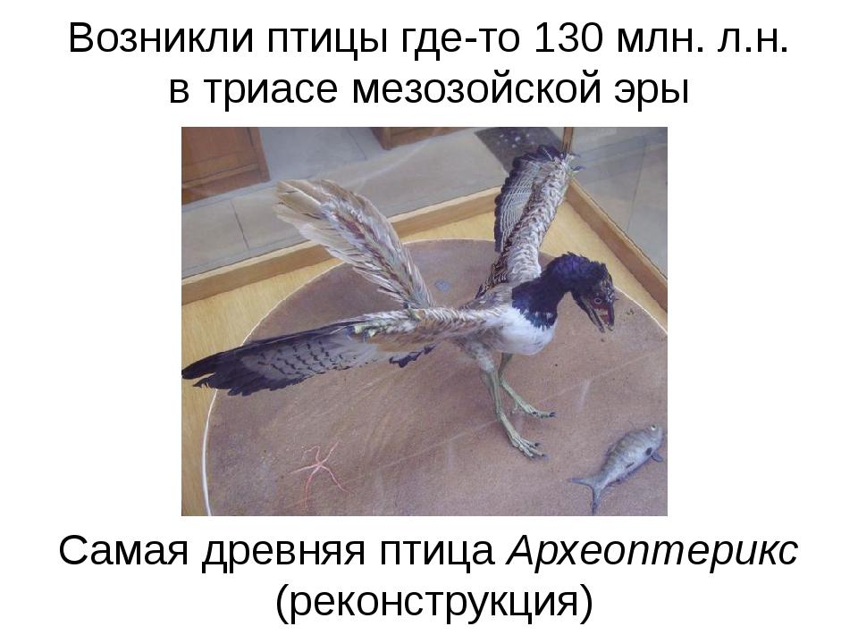 Возникли птицы где-то 130 млн. л.н. в триасе мезозойской эры Самая древняя пт...