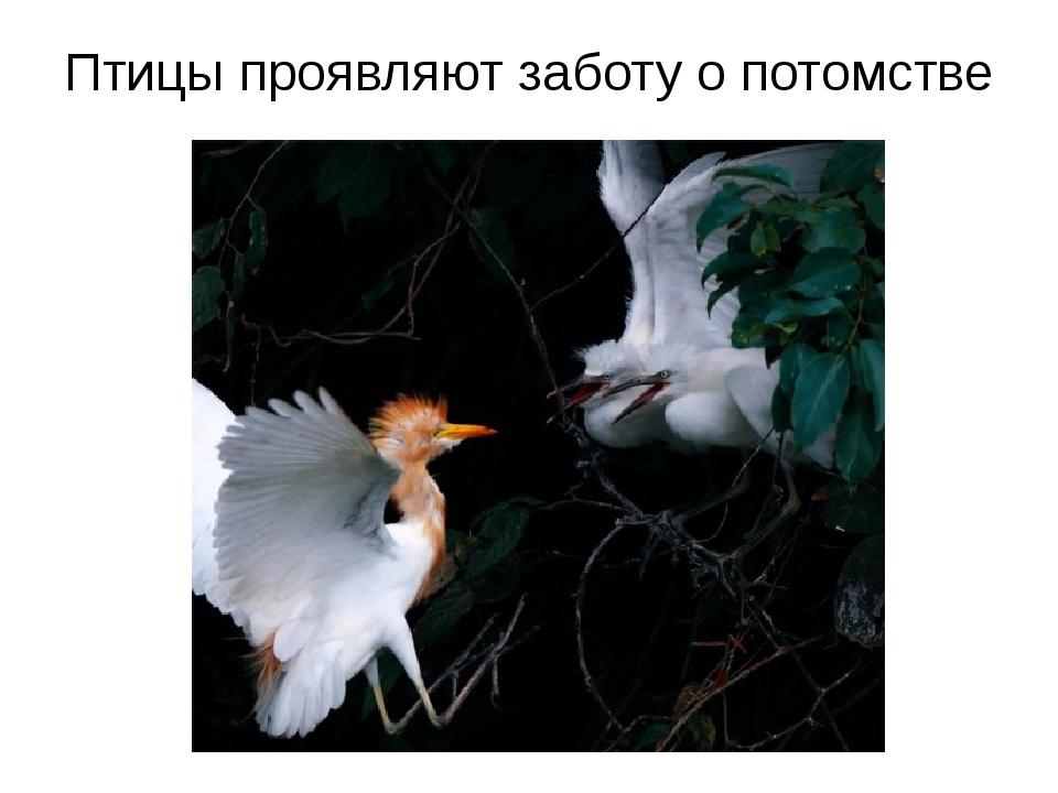 Птицы проявляют заботу о потомстве