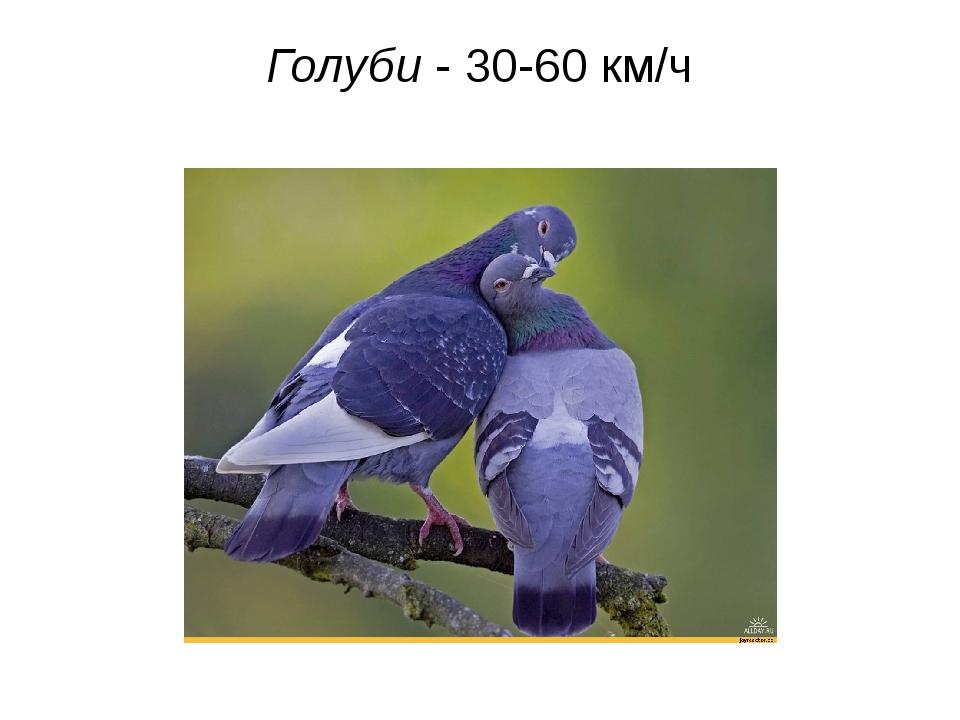 Голуби - 30-60 км/ч