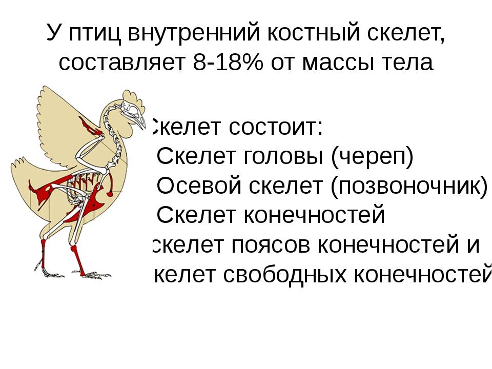 У птиц внутренний костный скелет, составляет 8-18% от массы тела Скелет состо...