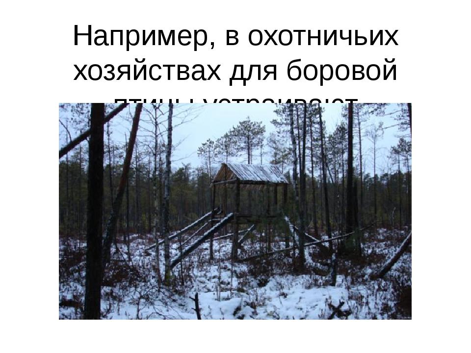 Например, в охотничьих хозяйствах для боровой птицы устраивают специальные га...
