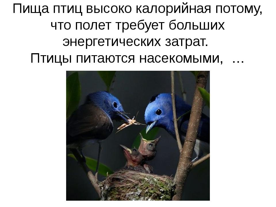 Пища птиц высоко калорийная потому, что полет требует больших энергетических...