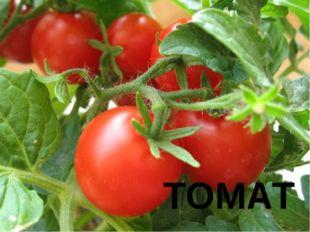№ 4 Этот овощ попал в Северную Америку из Европы, где пользовался плохой репу