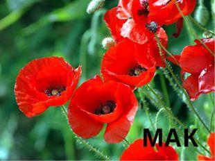 № 6 В Древней Греции на этом цветке гадали. Изо всей силы ударяли по нему. Уд