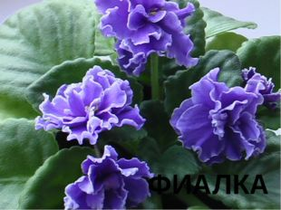 № 8 Согласно восточной легенде, цветок возник из слёз благодарности Адама, ко