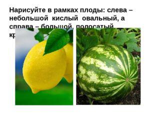 Нарисуйте в рамках плоды: слева – небольшой кислый овальный, а справа – больш
