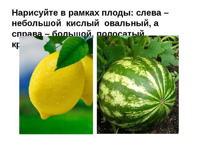 Нарисуйте в рамках плоды: слева – небольшой кислый овальный, а справа – больш...