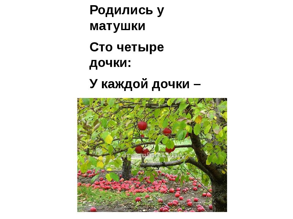 Родились у матушки Сто четыре дочки: У каждой дочки – Румяные щёчки, На косе...