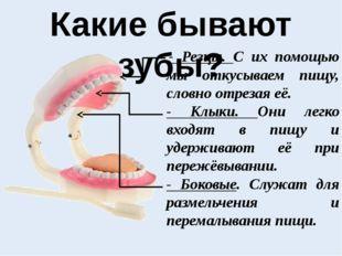 Какие бывают зубы? - Резцы. С их помощью мы откусываем пищу, словно отрезая
